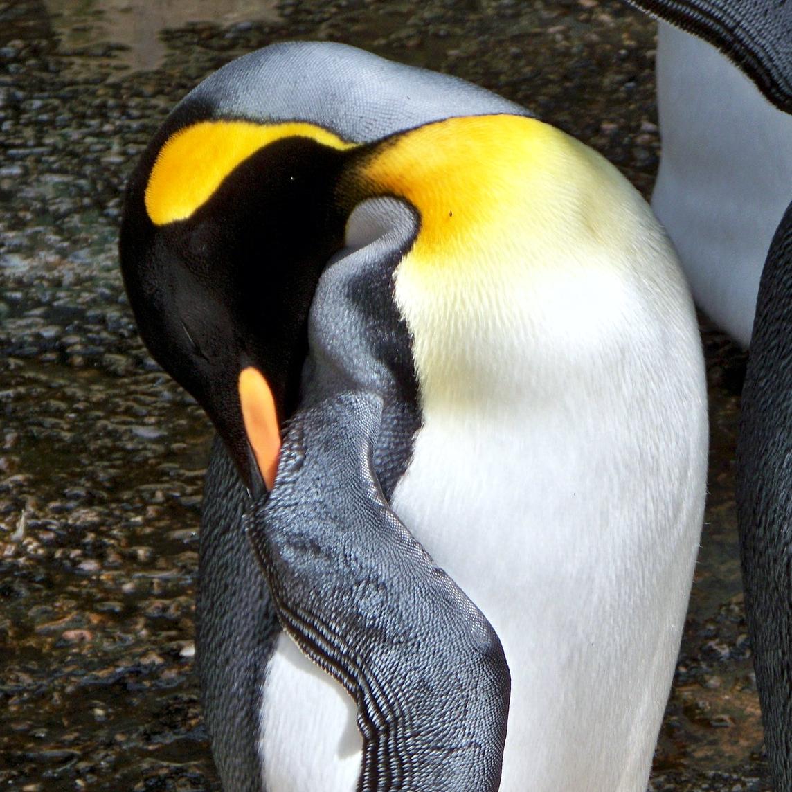 Il risveglio (automatico) del Pinguino!